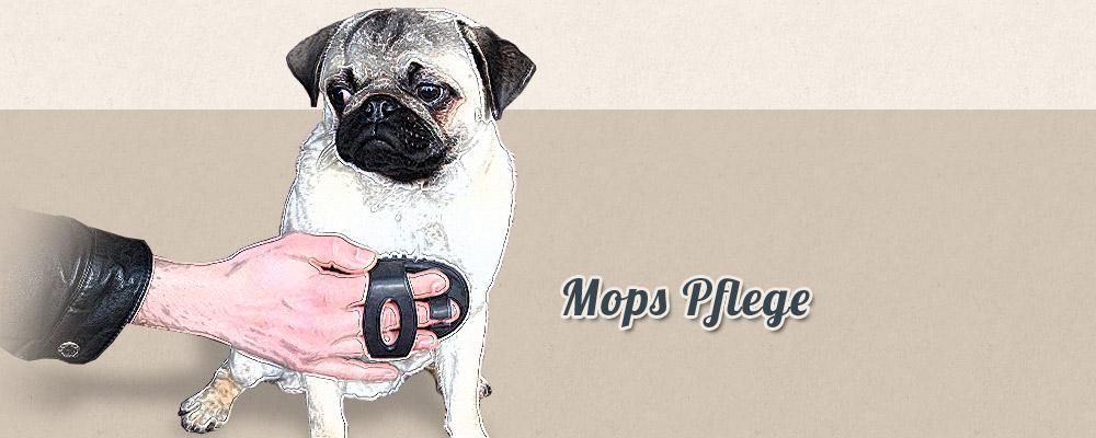 Mops Pflege - Augenpflege Fellpflege Krallenpflege Impfung Wurmkur